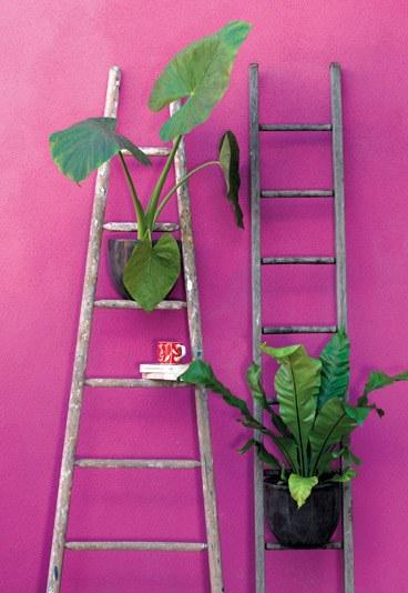 15plante-verte-ecehlle-153510_L