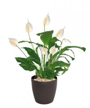 plante-bureau-depolluante.l