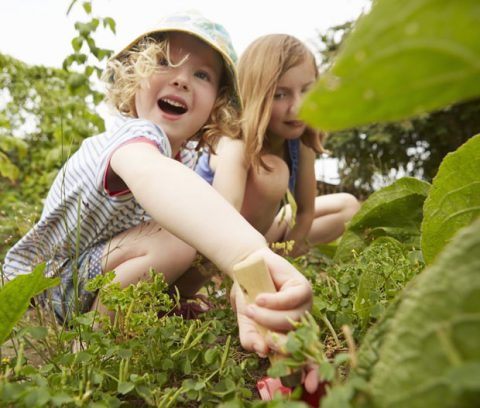 Jardiner-bio-notre-vrai-faux-pour-tout-savoir