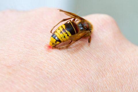 Une piqure d'abeille