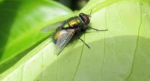 se débarrasser des mouches de façon zen