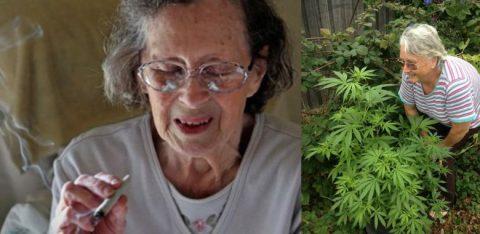 bienfaits cannabis alzheimer