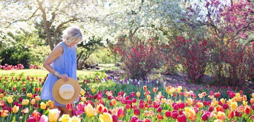 Jardin soleil ombrage